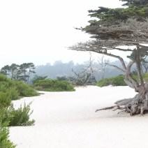 carmel-by-the-sea-beach-travel