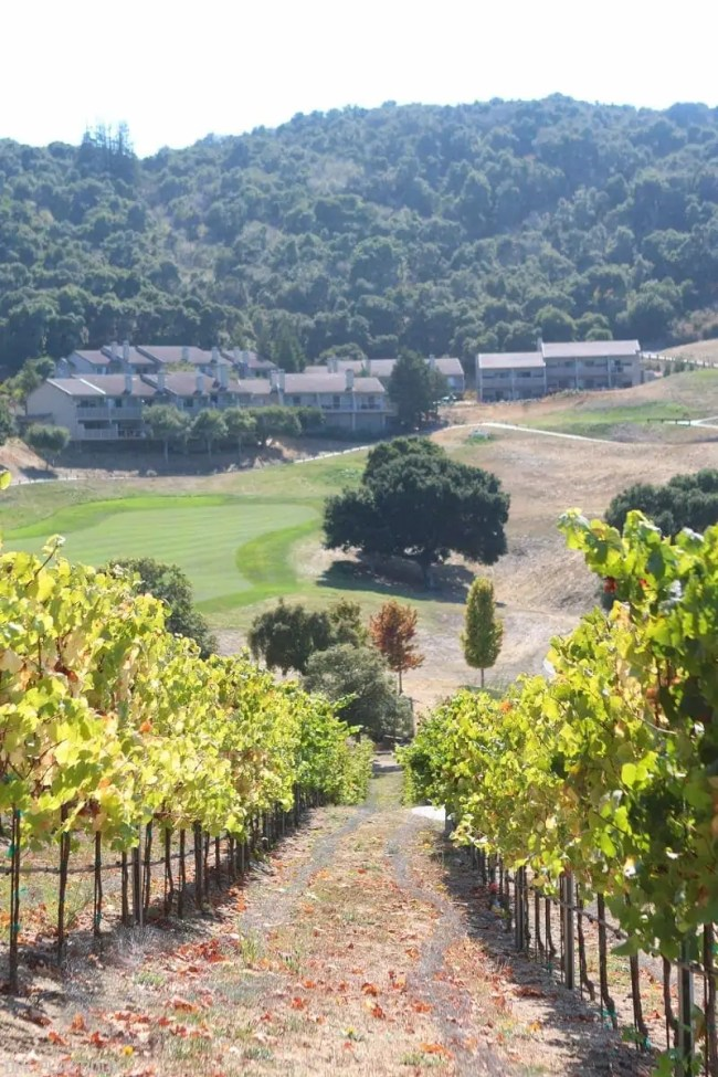 travel-carmel-valley-ranch-vineyard