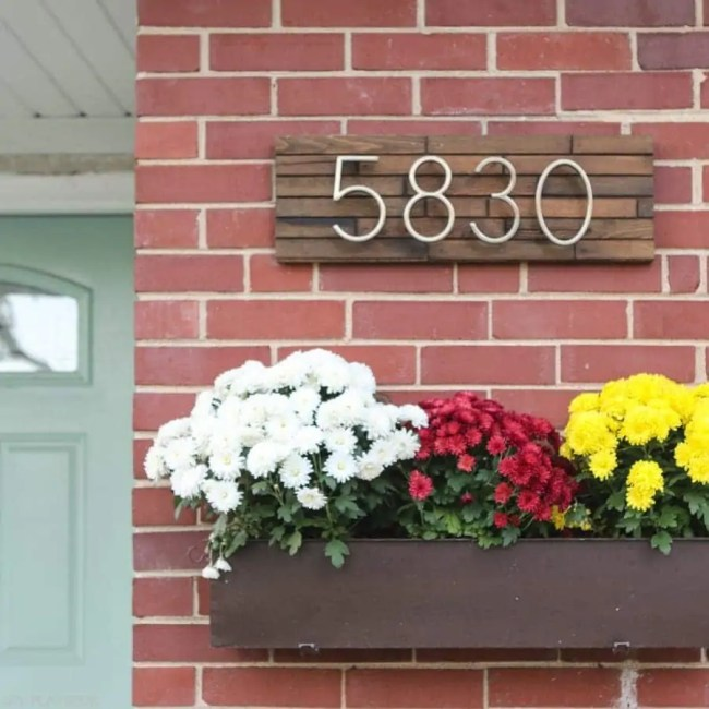 bridgets-first-house-fall-mums-2