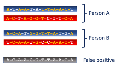 Paternal and maternal chromosomes for two people. Haplotype switching causes a false-positive match.