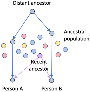 Two people can share a common ancestor that lived more recently than the origin of their shared DNA.