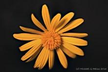 flowers-img_0004