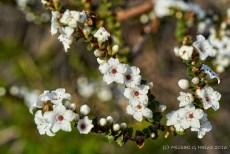 north-head-flowers-0037