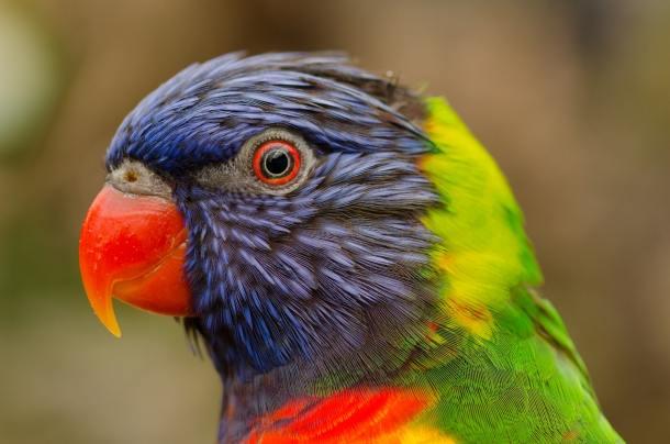 nature-bird-flying-red.jpg