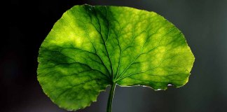 brain-leaf courtesy K. Bobinet 1