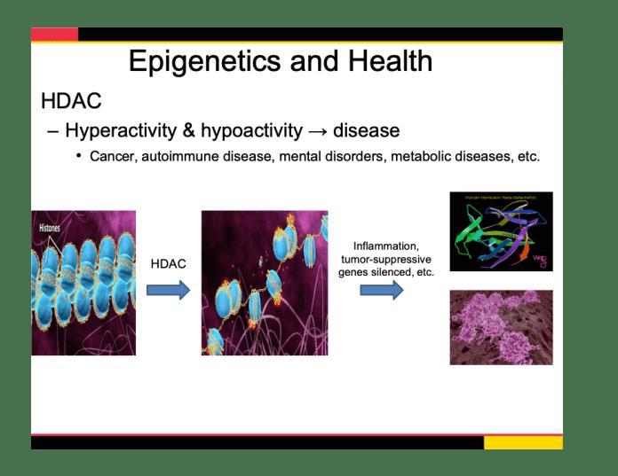 epigenetics and health slice 974 x 752