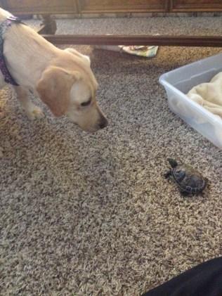 Hi Turtle