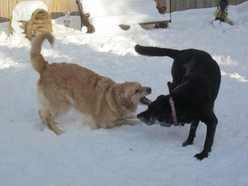 """""""Come on! I dare ya!"""" ☺"""