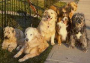 Sheeba & Friends, Apr. 2006