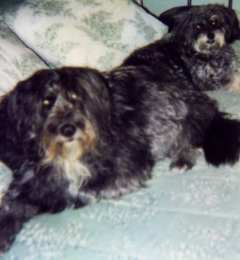 Sheeba & Mini-me, Sasha, Sept. 2001