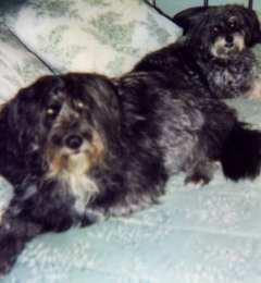 Sheeba & Mini-me, Sasha, Sept. 2001