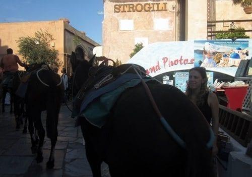 donkeys Santorini