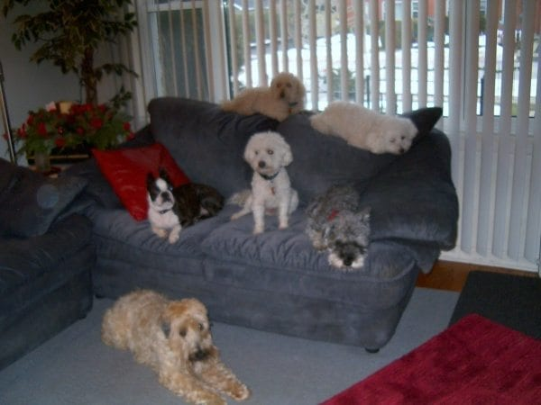 the small dog posse