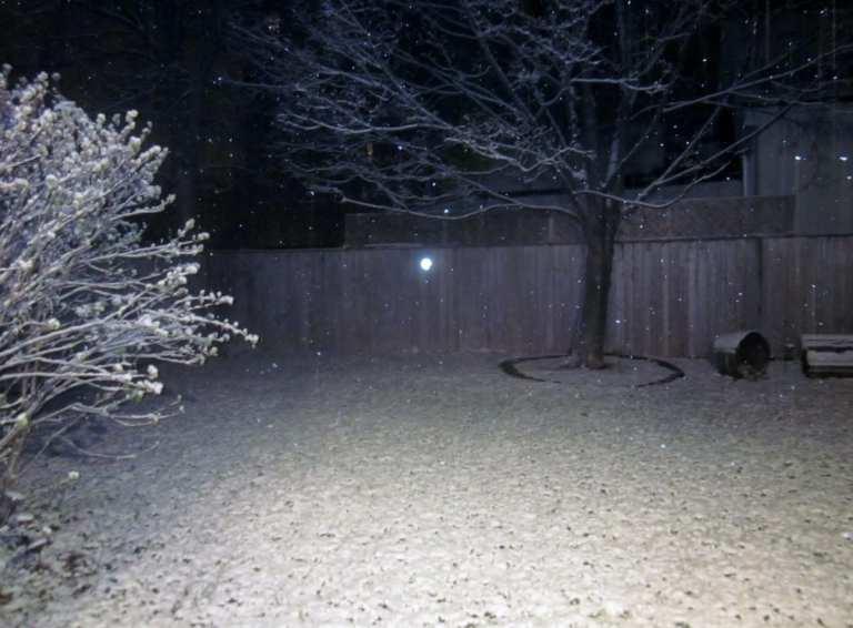 Photo Friday - Snow!