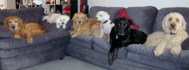 #AtoZChallenge 2016: Dob Breeds & Anecdotes @The Doglady's Den