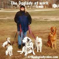 The Doglady at work