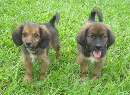 SnickerDoddle and SugarBear ~ Fuzzy Puppies!