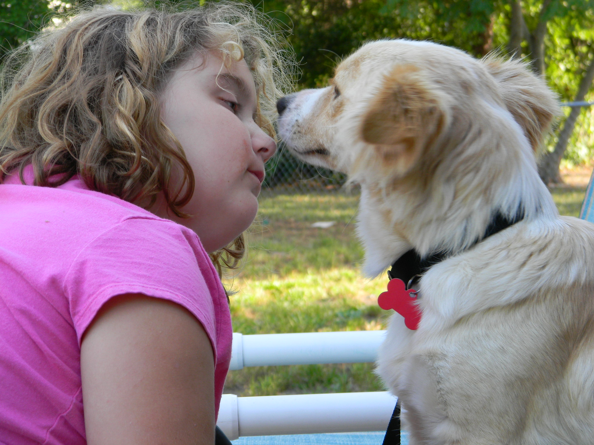 Adopting A Heartworm Positive Dog And What You Didn T Know