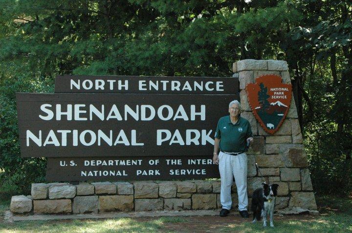 Shenandoah, the Sheltie Girl-Adopted!