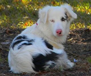 Great Websites for Training Deaf Dogs