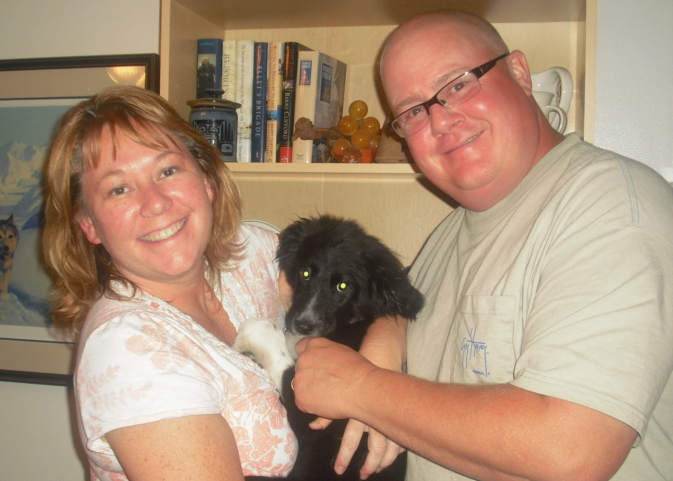 Flipper the Border Collie Puppy ~ Adopted