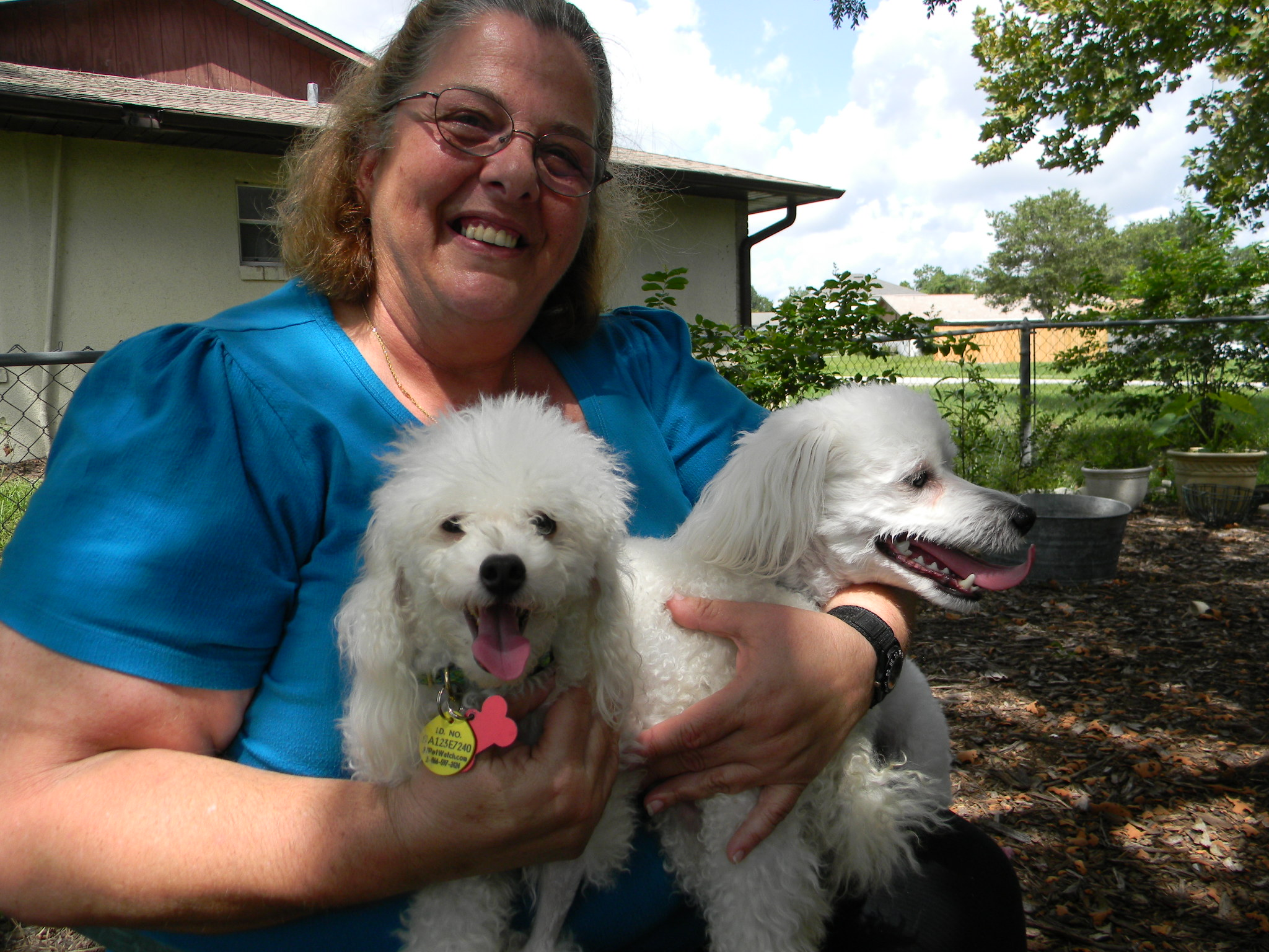 Jean Luc the Tea Cup Poodle, Clearly NOT a Border Collie ~ Adopted