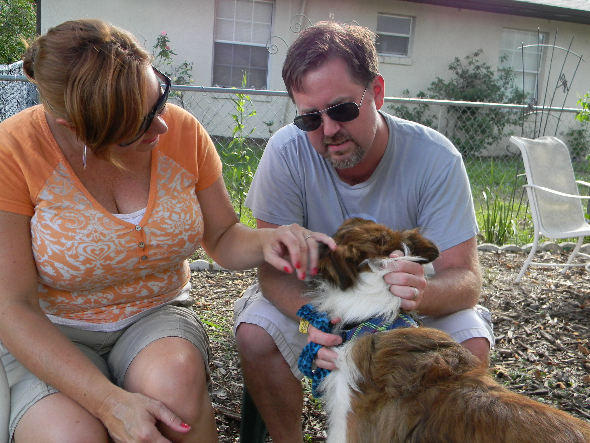 """Rhys the """"Lassie"""" Collie~Adopted"""