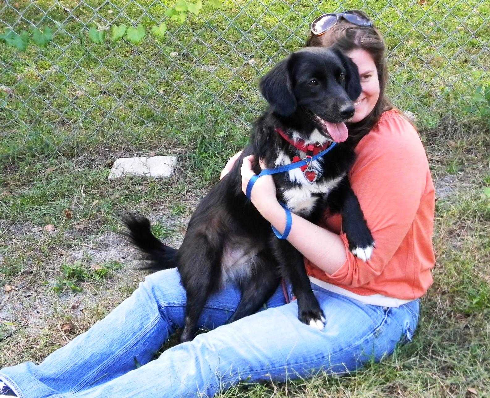 Caylee, the petite Border Lab ~ Adopted