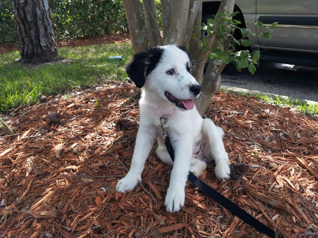 Pippa~Adopted