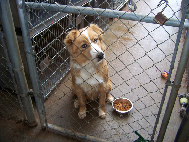 Our Intake Process, for Shelters, Pounds, and Owner-Surrenders