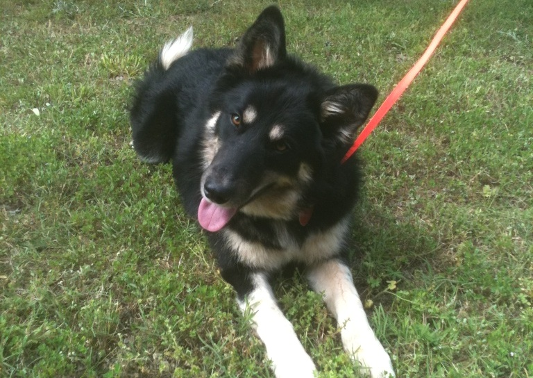 Foxy Lady~in Florida ~ Adopted