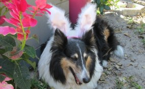 Gidget's first Easter in Cocoa Beach