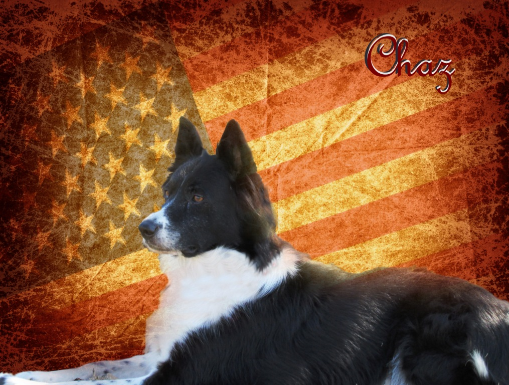 Chaz-Ma-Taz~Adopted