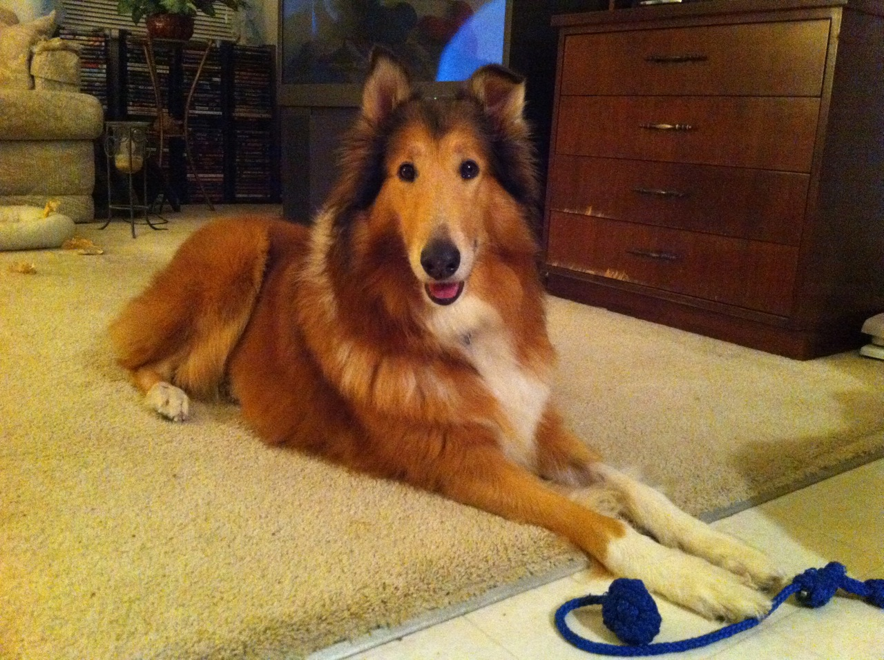 Adopting a Senior Dog