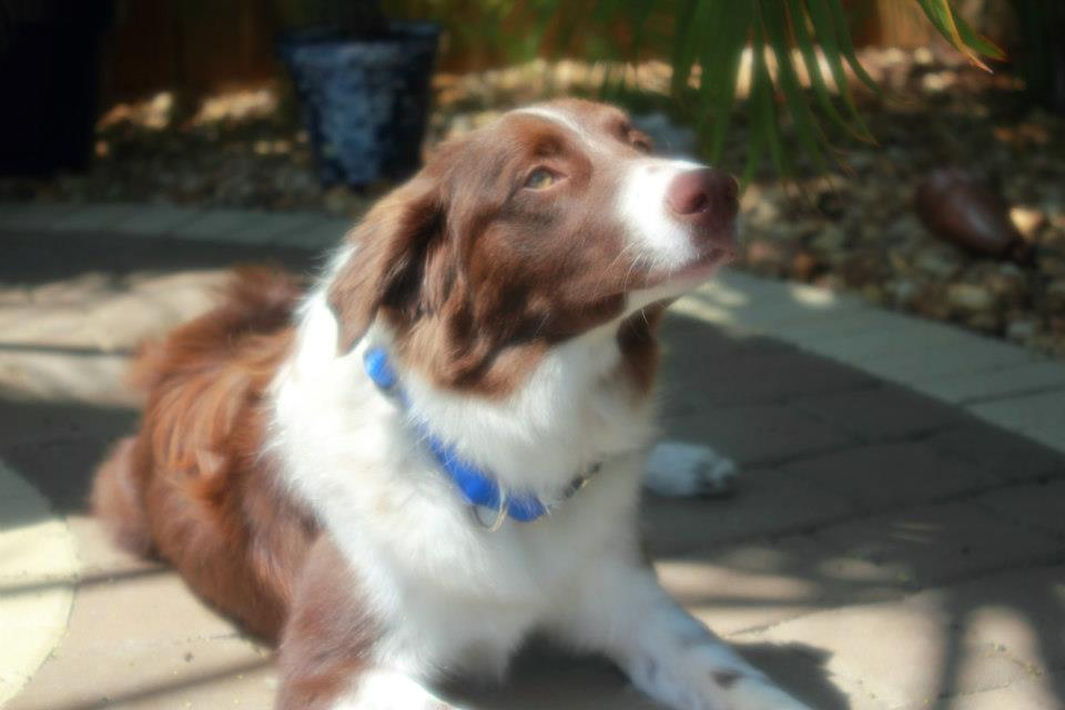 Guinness~Adopted