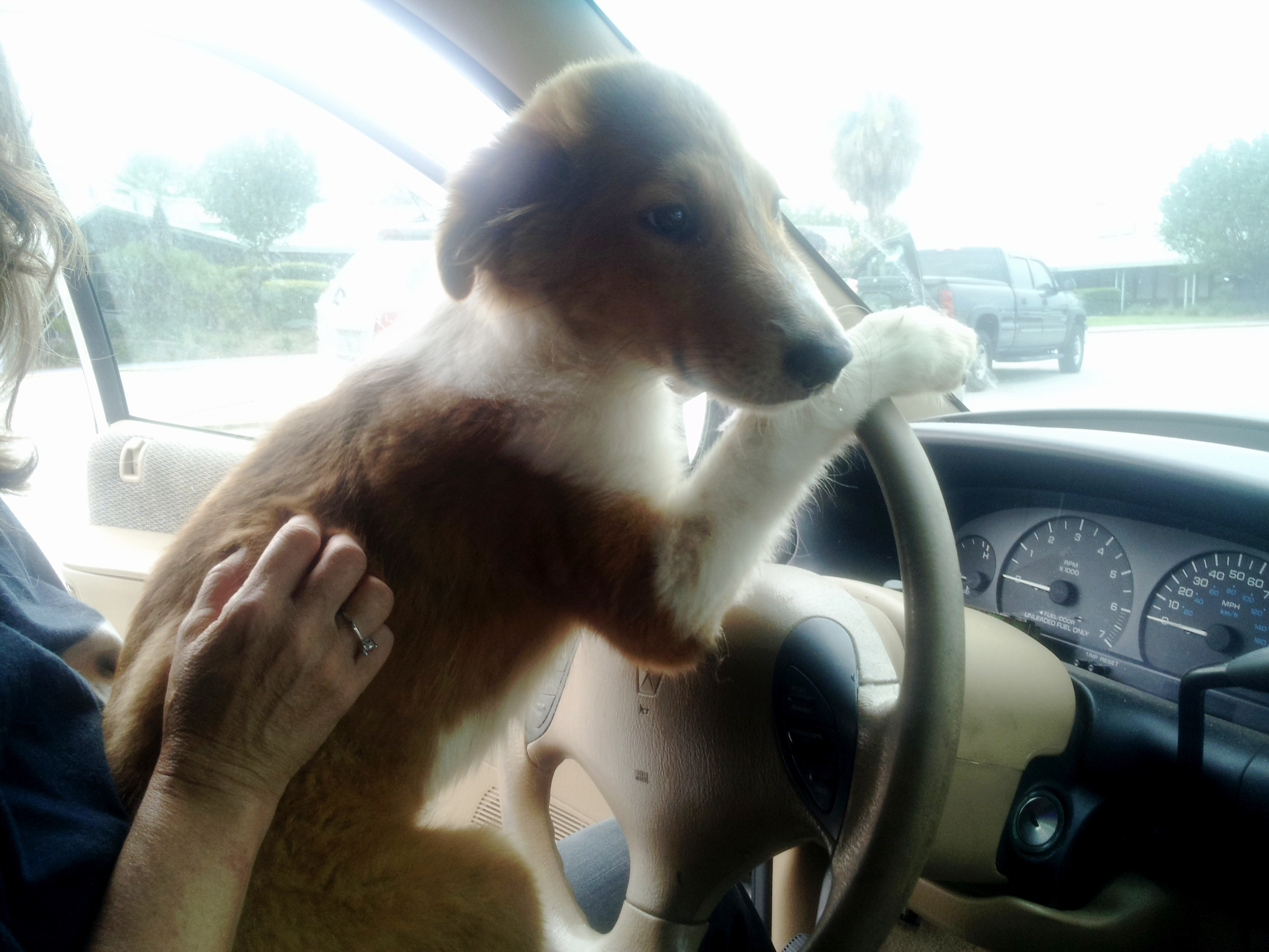 Dogs Need a Freedom Ride!