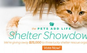 Pets Add Life Shelter Showndown