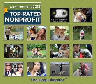 Vote TDL at Great NonProfits