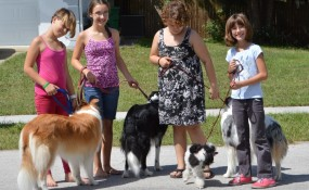 Sarah solicits friends to show Alfie how to walk with the pack!