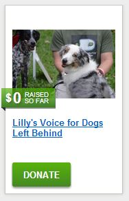 Lilly's Voice for Dogs Left Behind