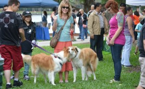 Shep (Alfie) and Lady Di at Earth Day 2013