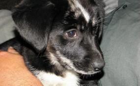 Mardi Gras Puppy #2