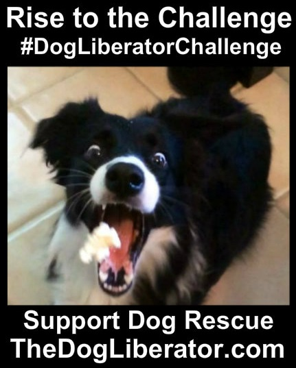 #DogLiberatorChallenge – Promote Your Doggie Selfies!