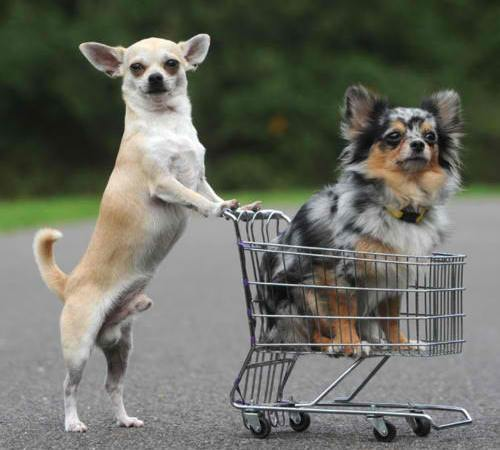 Loyalty Shopping!