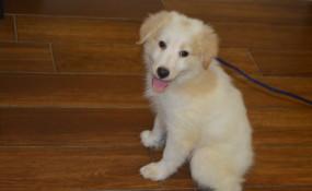 Olaf the fluffy puppy