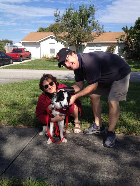 Ringo, the Perfect Border Collie ~ Adopted!
