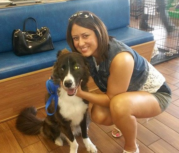 Dr. House – The stunning Border Collie Boy! ~ Adopted!