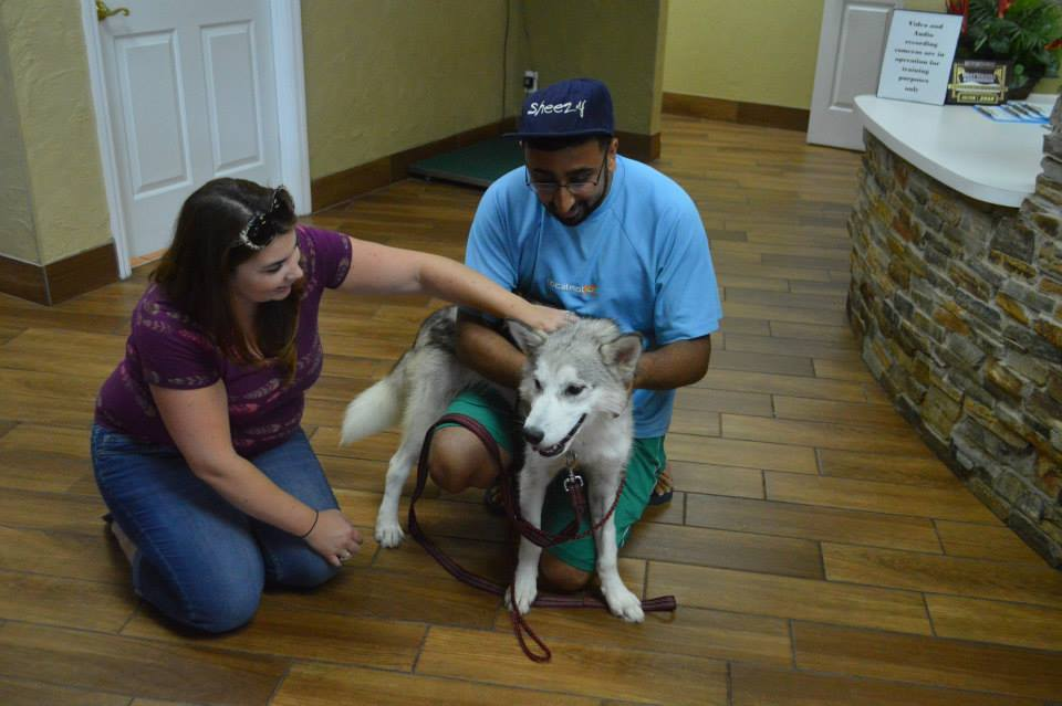 Grey Wind ~ Adopted!