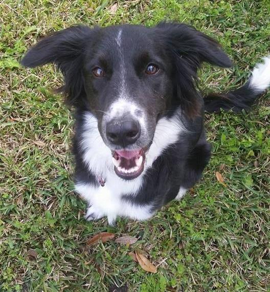 Kazoo ~ Adopted!