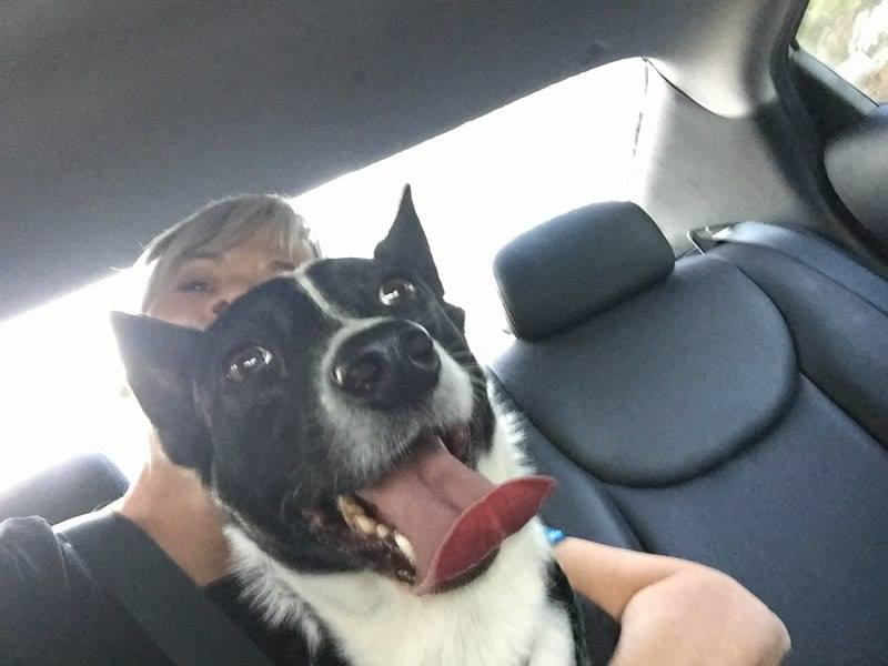 Hugo ~ Adopted!